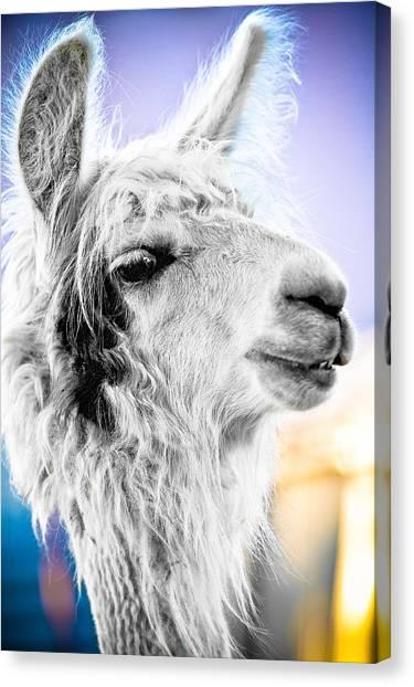Dirtbag Llama Canvas Print