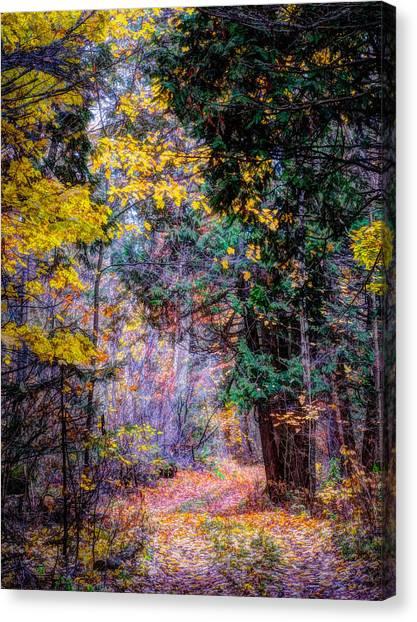 Distant Path Canvas Print