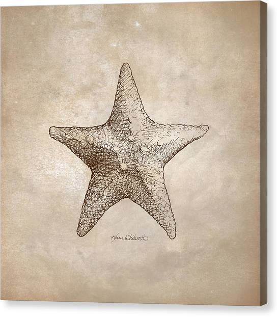 Biologist Canvas Print - Distressed Antique Nautical Starfish by Karen Whitworth
