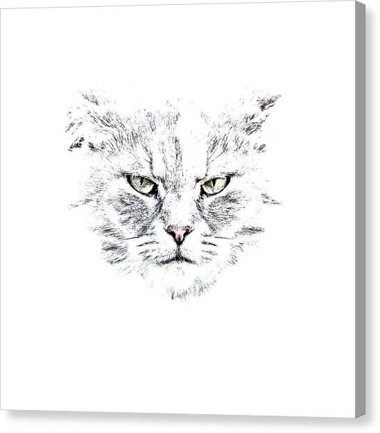 Shirt Canvas Print - Disturbed Cat by Everet Regal