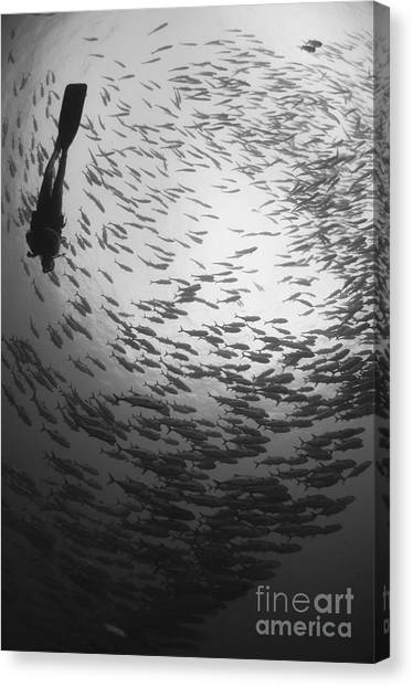 Kimbe Bay Canvas Print - Diver And A Large School Of Bigeye by Steve Jones
