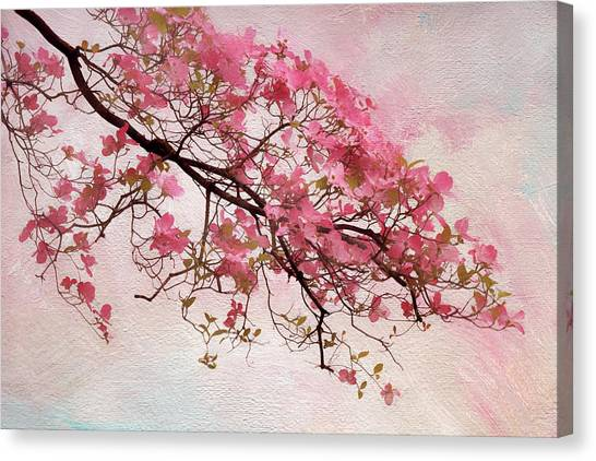 Tree Blossoms Canvas Print - Divine Dogwood  by Jessica Jenney