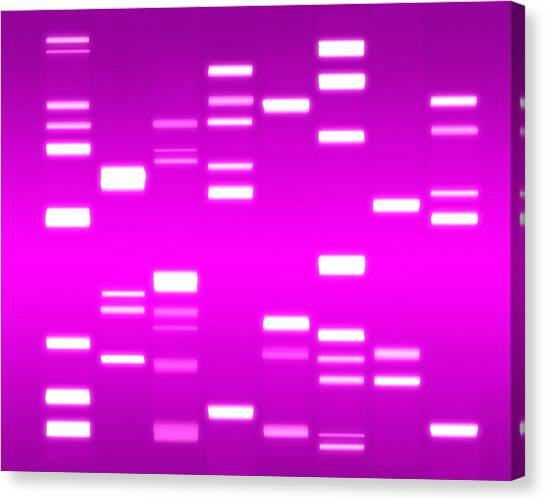 Biology Canvas Print - Dna Magenta by Michael Tompsett