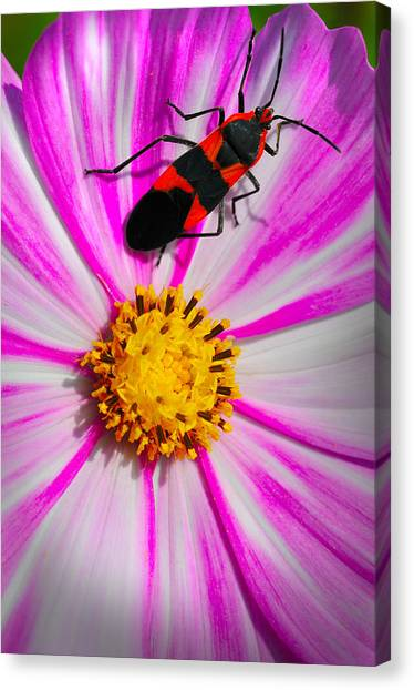 Do I Clash With This Flower? Canvas Print