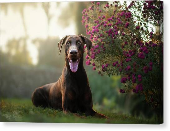 Doberman Pinschers Canvas Print - Doberman Pinscher by Jackie Russo