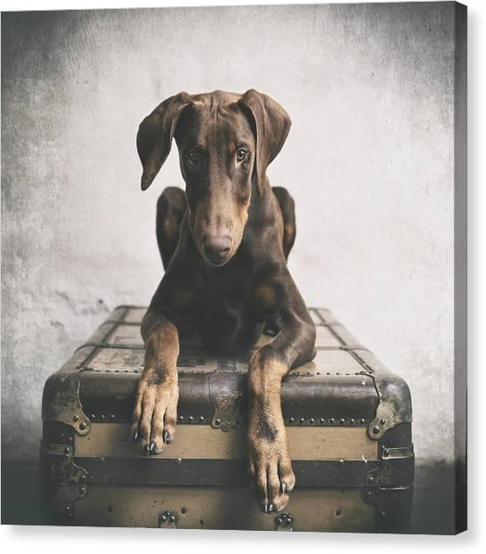 Doberman Pinschers Canvas Print - Doberman Pinscher Puppy 3 by Wolf Shadow Photography