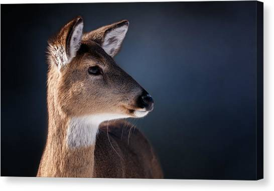White-tailed Deer Canvas Print - Doe Portrait - White Tailed Deer by SharaLee Art