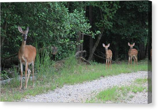 Doe With Twins Canvas Print