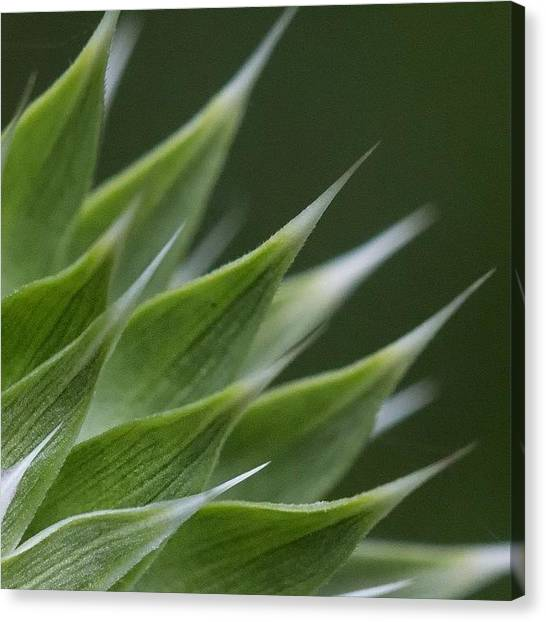 Social Canvas Print - Dof by Dave Edens