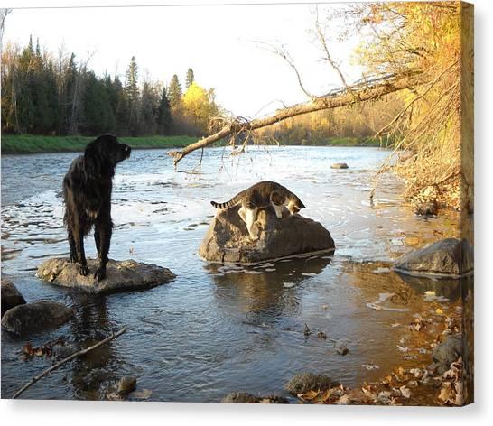 Dog And Cat Exploring Rocks Canvas Print
