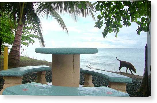 Dog By The Beach In Rincon Canvas Print