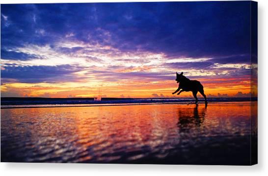 Dog Chasing Stick At Sunrise Canvas Print