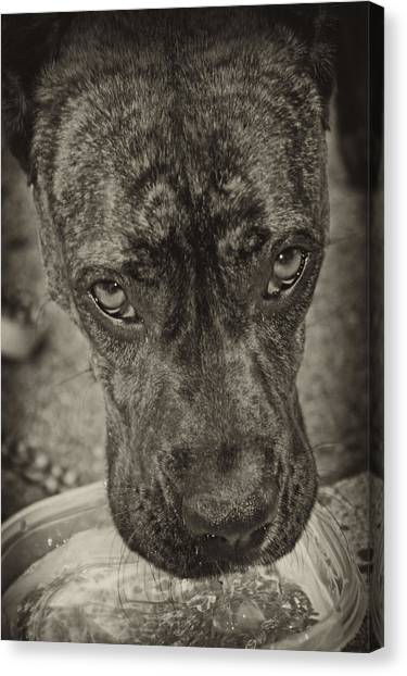 Dog Days Canvas Print by Off The Beaten Path Photography - Andrew Alexander