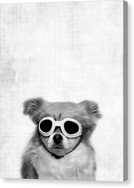 Chin Canvas Print - Goggles  by Delphimages Photo Creations
