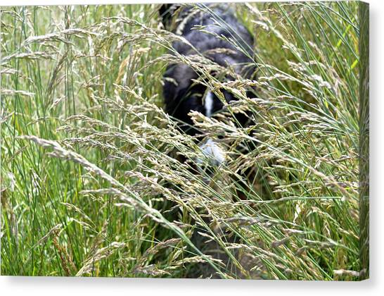 Bernese Mountain Dogs Canvas Print - Dog Hiding In The Grass by Pelo Blanco Photo