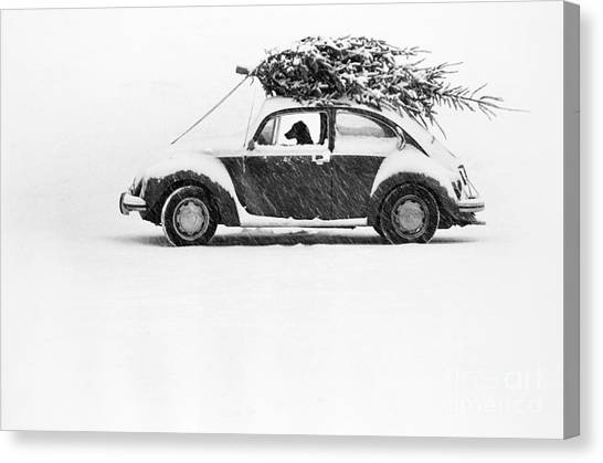 Dogs In Snow Canvas Print - Dog In Car  by Ulrike Welsch and Photo Researchers