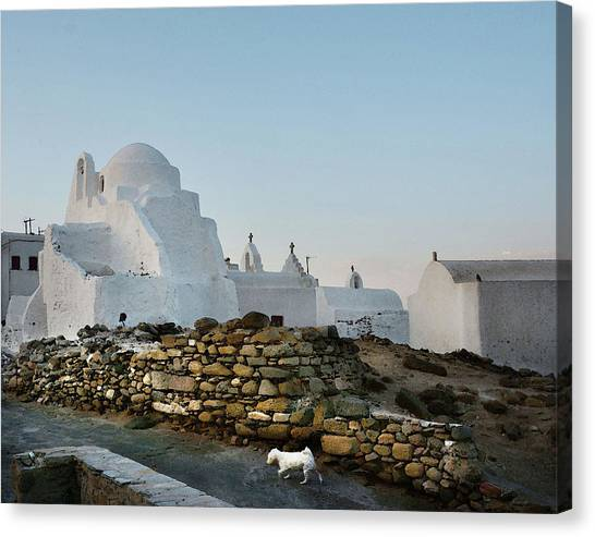 Dog In Mykonos Canvas Print