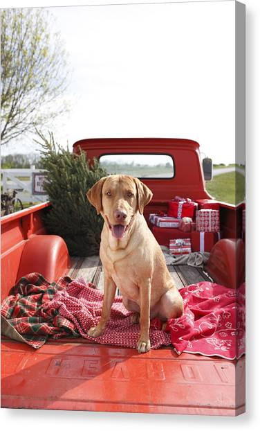 Dog In Truck Bed With Pine Tree Outdoors Canvas Print by Gillham Studios