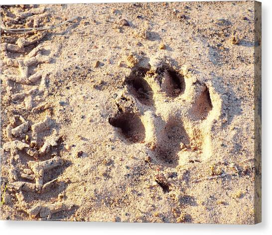 Dirt Bikes Canvas Print - Dog Paw Print Outside. by Shelby Boyle