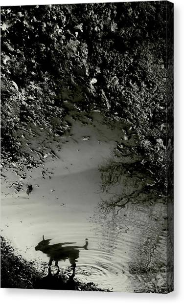 Conceptual Art Canvas Print - Dog Reflection by Cambion Art