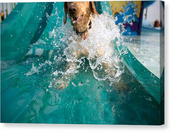 Dogs Canvas Print - Dog Splashing In Water by Gillham Studios