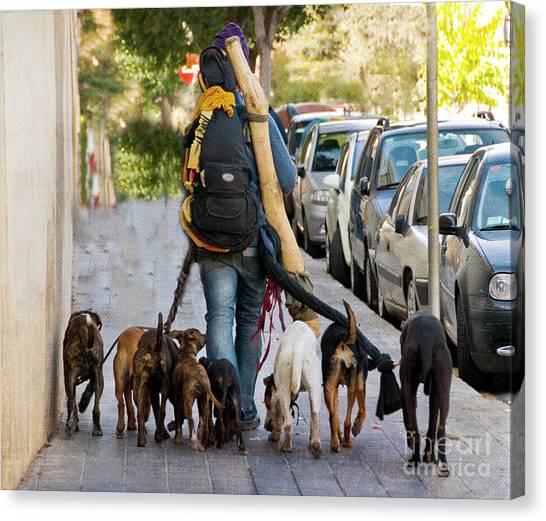 Backpacks Canvas Print - Dog Walker by Juli Scalzi