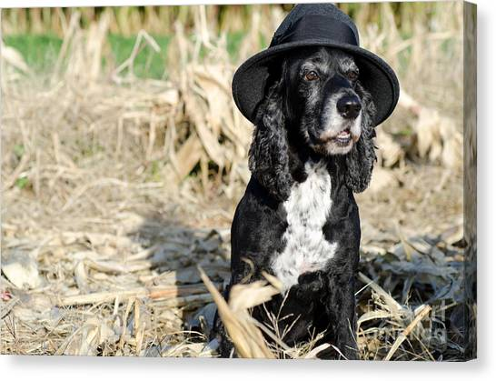 Dog With A Hat Canvas Print