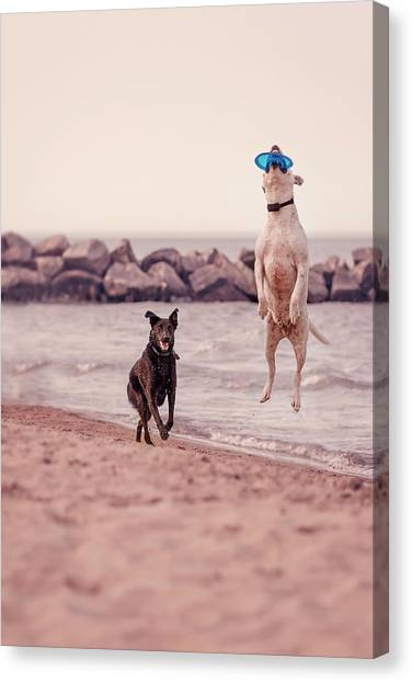Dog With Frisbee Canvas Print