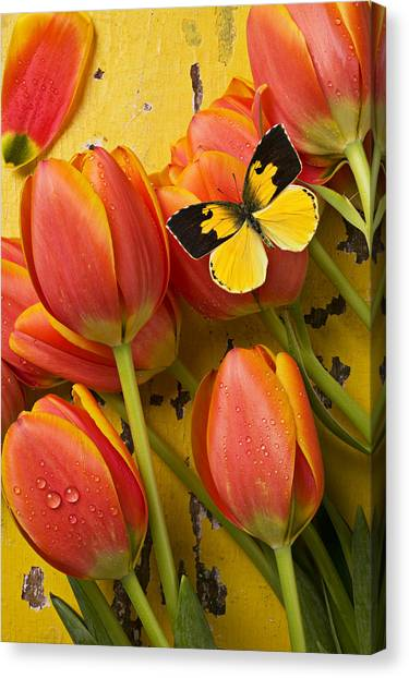 Spring Canvas Print - Dogface Butterfly And Tulips by Garry Gay