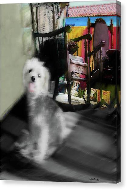 Dogie In The Patio Art  Canvas Print