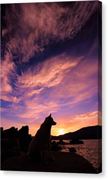 Dogs Dream Too Canvas Print