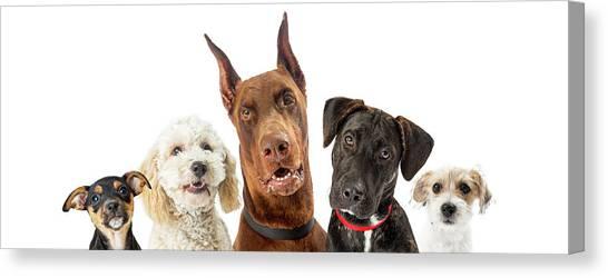 Doberman Pinschers Canvas Print - Dogs Of Various Sizes Close-up Web Banner by Susan Schmitz