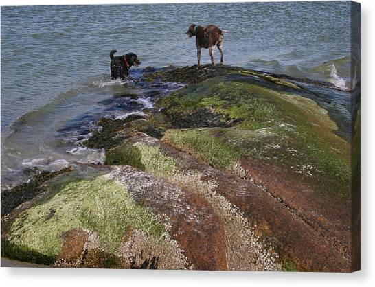 Dogs On The Rocks Canvas Print by Rose Martin