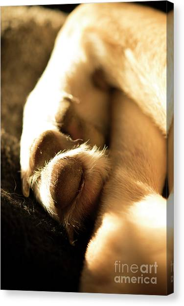 Dog Paw Canvas Prints (Page #39 of 55) | Fine Art America