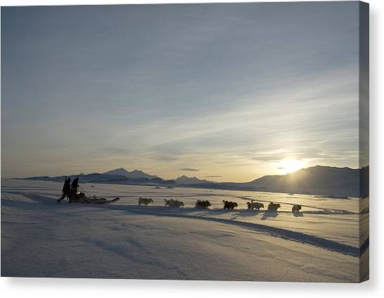 Huskie Canvas Print - Dogsledge, Northern Greenland by Louise Murray