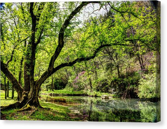 Dogwood Canyon In Spring Canvas Print