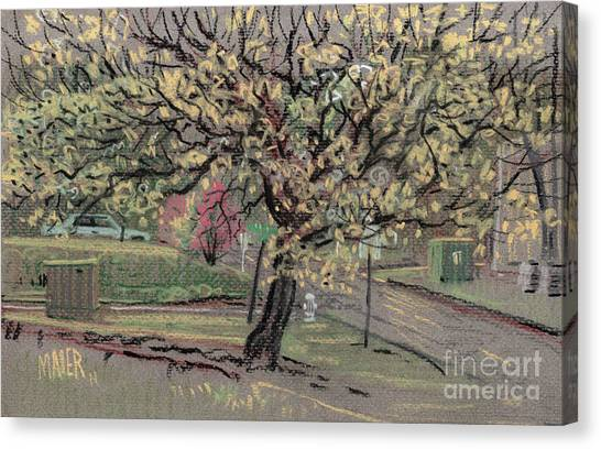 Spring Canvas Print - Dogwood by Donald Maier