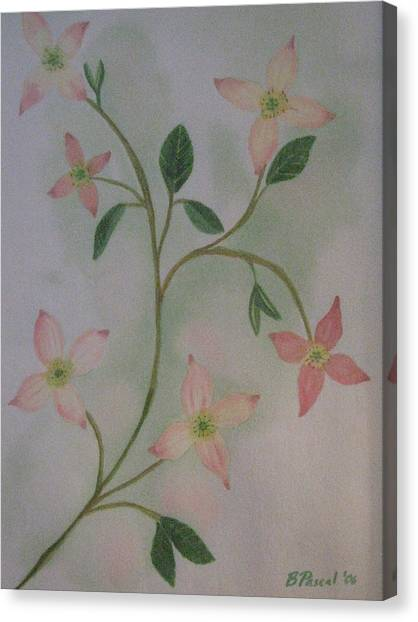 Dogwood Spring Canvas Print by Barbara Pascal