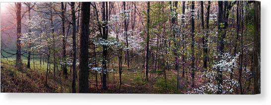 Dogwoods At Sunset Canvas Print by Lloyd Grotjan