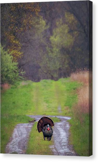 Doing The Turkey Strut Canvas Print