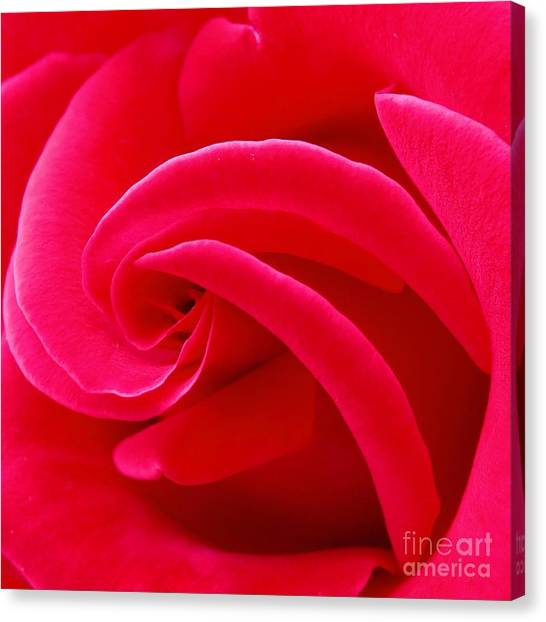 Dolly Parton's Red Rose Canvas Print