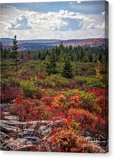 Dolly Sods Wilderness In Autumn 4273 Canvas Print
