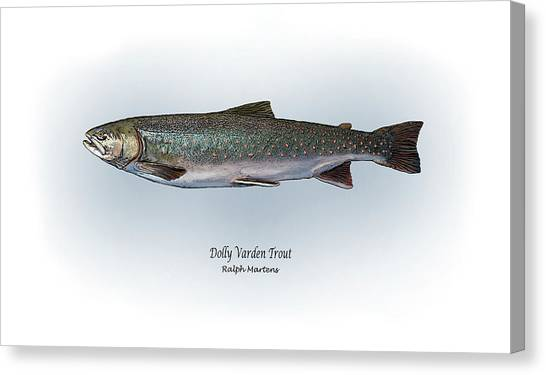 Angling Art Canvas Print - Dolly Varden Trout by Ralph Martens