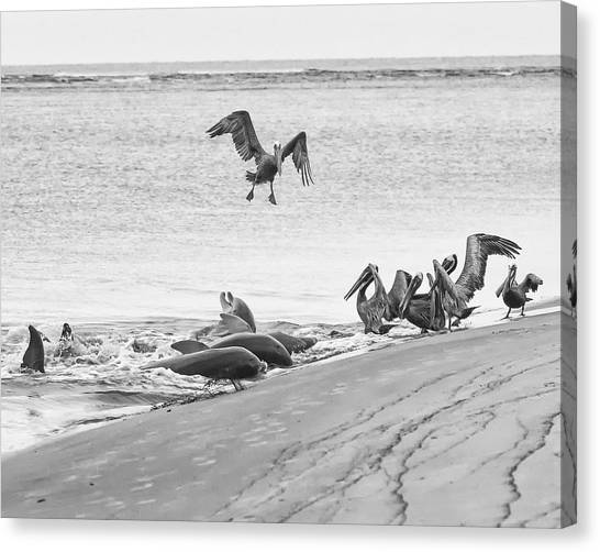 Dolphin And Pelican Party Canvas Print