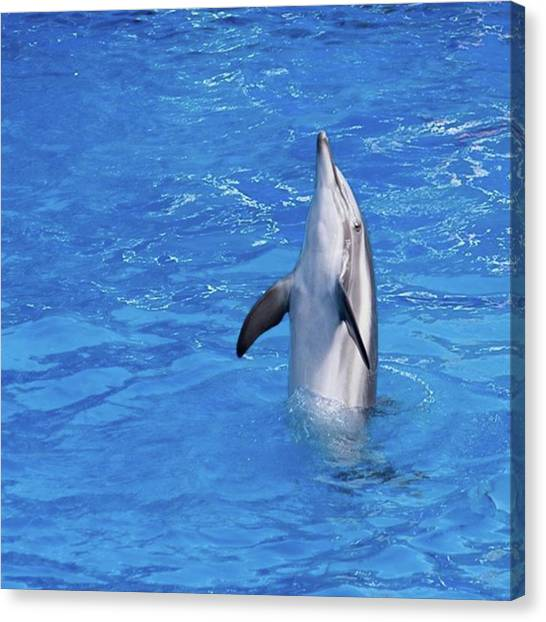 Flipper Canvas Print - #dolphin #dolphinshow #dolphins by Fink Andreas