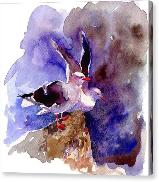 Dolphin Gulls Canvas Print