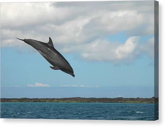 Dolphin Jump Canvas Print