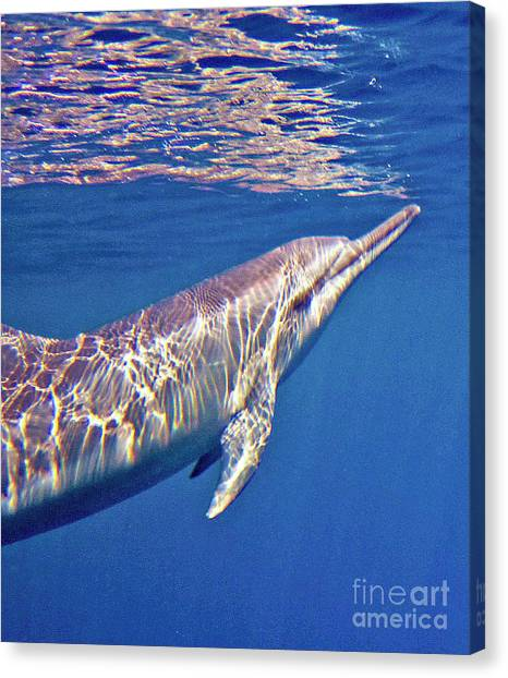 Dolphin Reflections Canvas Print