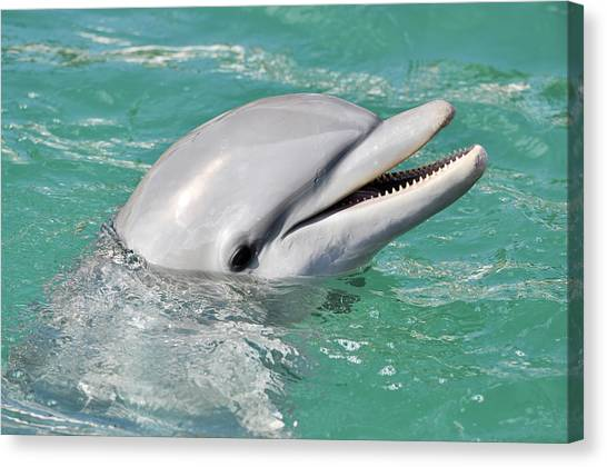 Dolphin Smiling Close Up Canvas Print