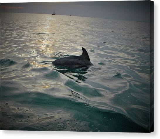 Dolphin Watching Canvas Print